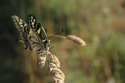 Butterfly, Drexel, Summer, Fly, Insect, Animal, Nature