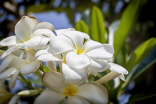 Flower, Flora, Nature, Plant, Garden, Natural, Leaf