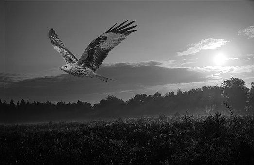 Nature, Bird Of Prey, Sun, Landscape, Bird, Sunrise