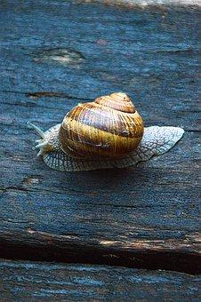 Snail, Animal, Nature, Snail Shell, Fauna, Slide