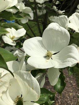 Spring, Flower, Ehite, Nature, Green, Spring Flower