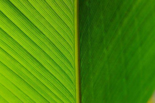 Detail, Approach, Leaf, Green, Plant, Texture, Tree