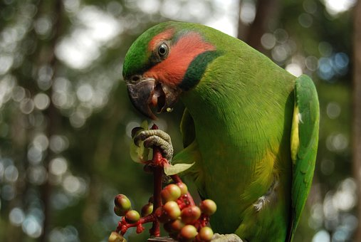 Birds Of Typical, Cateches Of Natuna, Archipelago