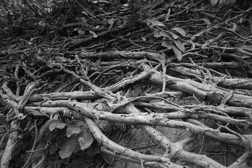 Tree, Black And White, White, Black, Nature, Branch