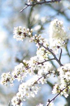 Summer, Blossom, Bloom, Flower, Plant, Spring, White