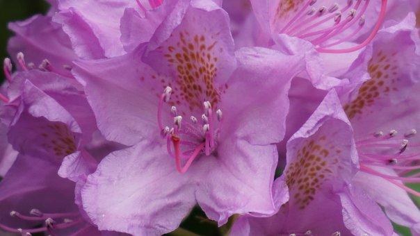 Garden, Flowers, Pink Flower, Flora