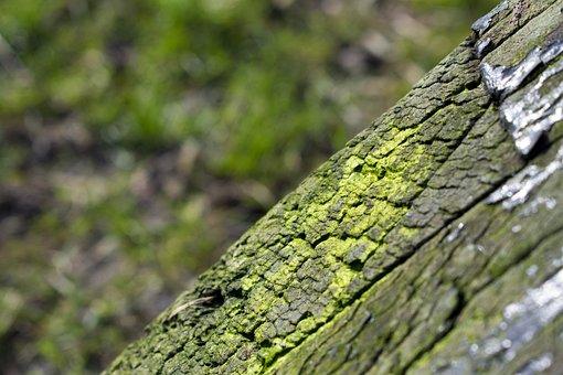 Tree, Bark, Moss, Nature, Forest, Wood, Green, Burn