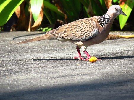 Bird, Feed, Outdoor