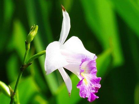 Flower, White, Pink