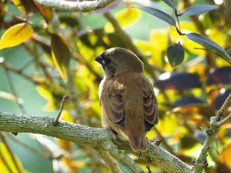 Bird, Tree Branch, Sitting, Cute