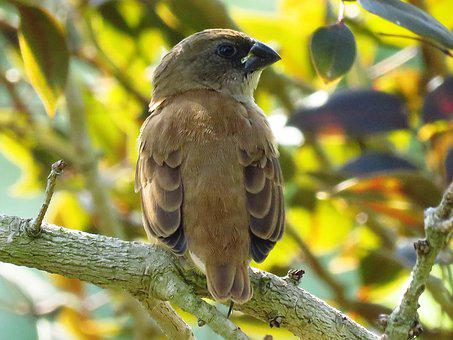 Bird, Sitting, Tree Branch