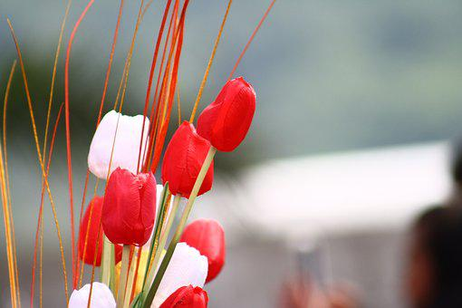 Tulip, Flower, Isolated, Red, Spring, Nature, Floral