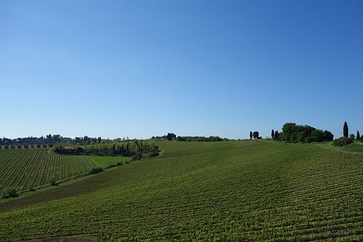 Tuscany, Countryside, Vineyard, Italy, Landscape, Hill