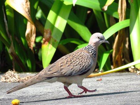Bird, Close Up, Waling