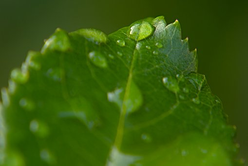 Drop Of Water, Drip, Leaf, Macro, Liquid, Water, Nature
