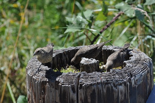 Birds, Nature, Log, Wild, Wildlife, Spring