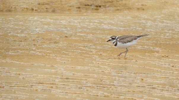 Bird, Yellowstone, National, Wyoming, Wildlife, Usa