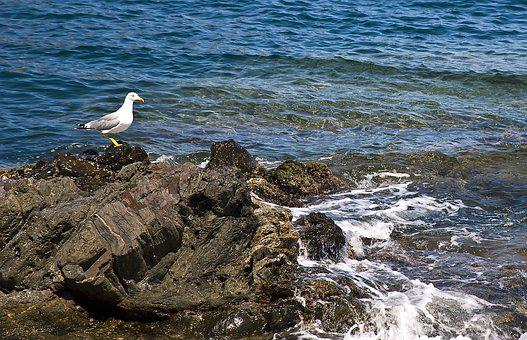 Sea, Seagull, Ave, Beach, Bird, Summer, Costa, Blue Sea