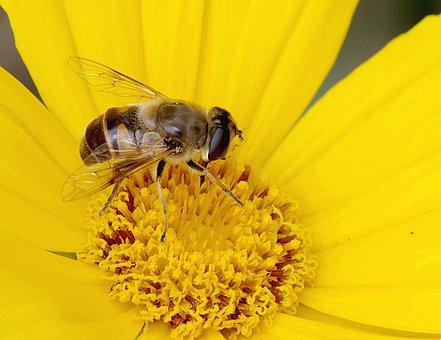 Mucha, Camouflage, Bee, Macro, Appearance, Upodobnienie
