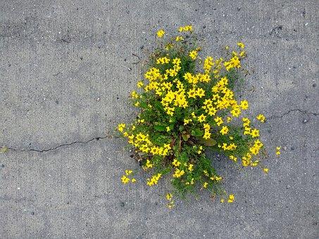 Force, Flowers, Nature, Concrete, Plant, Impressive