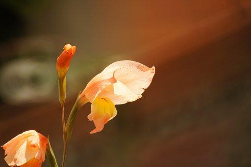 Nature, Flora, Florez, Insects, Armenia, Quindio