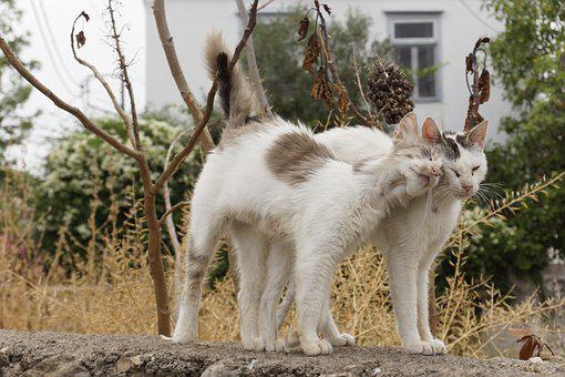 Cats, Greece, White, Pet, Kitty, Homeless, Animal