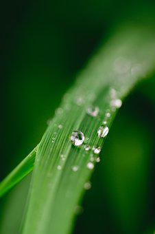 Green, Water, Leaf, Dew, Nature, Grass, Drop, Plant
