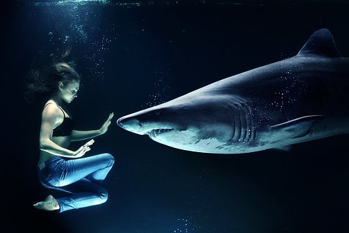 Woman, Hai, Great White Shark, Underwater, Sea
