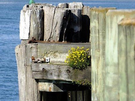 Wharf, Sea, Pier, Dock, Landscape, Wooden, Outdoors