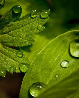 Macro, Photography, Green, The Leaves