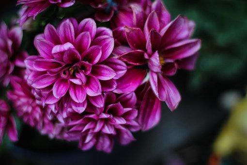Floral, Nature, Rain, Flower, Natural, Green, Bloom