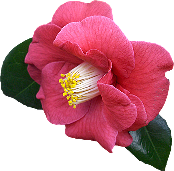 Png, Clipping, Flower, Graphics