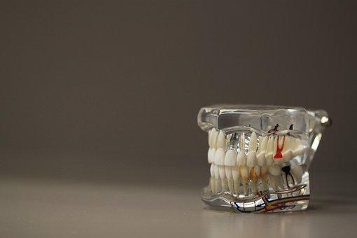 Dentistry, Dentals, Teeth, Model, Jaw, Oral, Care