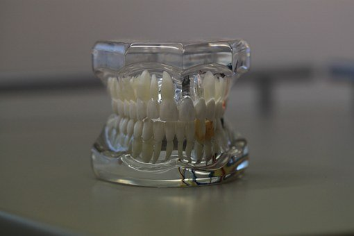 Dentistry, Dentals, Teeth, Model, Jaw, Tooth