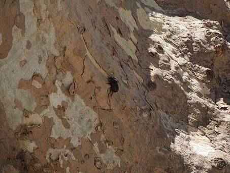 Rhinoceros Beetle, Beetle, Krabbeltier