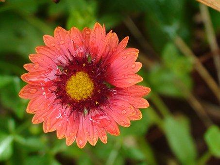 Flower, Nature, Natural, Green, Bloom, Botanical, Bud