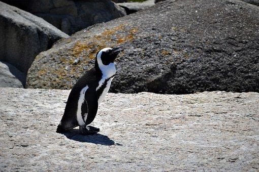 Penguin, Enjoy, Drag