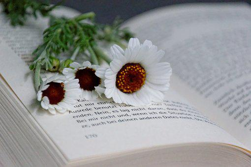 Book, Flowers, Read, White, Dreams