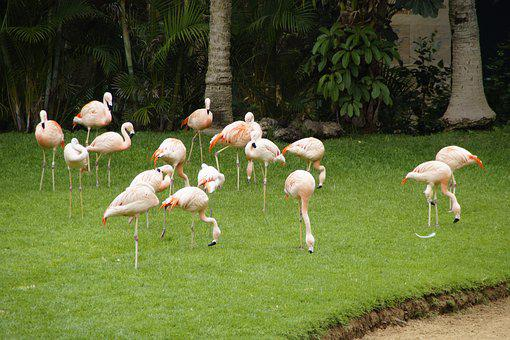 Flamingos, Pink Flamingos, Birds, Leggy, Pink, Zoo