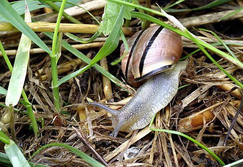 Snail, Pest, Colored, Strips, Molluscum, Grass, Green