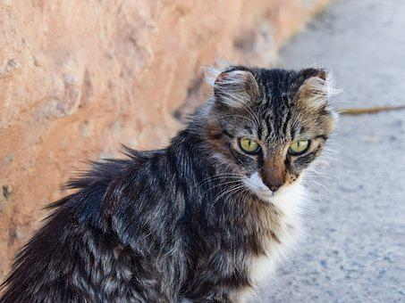 Cat, Stray, Eyes, Looking, Homeless, Street, Young