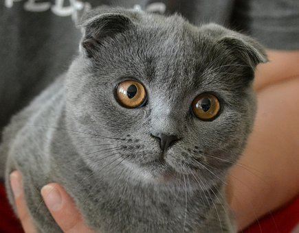 Cat, Kitten, Pet, Mieze, Cute, Sweet, Adidas, Young Cat