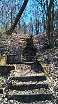 Forest, Stairs, Old, Tree, Foliage