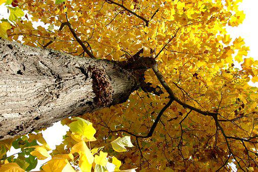 Nature, Tree, Crown, Light, Deciduous Tree