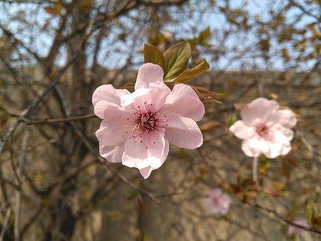 Begonia Flower, Vertical Silk Begonia Spring