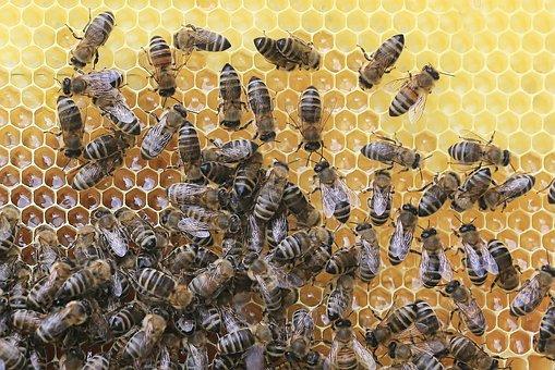 Bees, Honeycomb, Beekeeper, Honey, Insect, Beehive