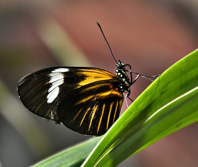 Butterfly, Black Yellow White, Close