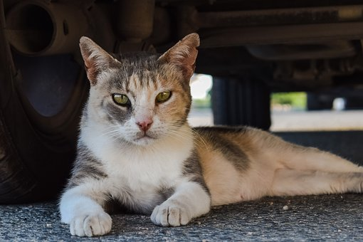 Cat, Stray, Animal, Cute, Homeless, Street, Sitting