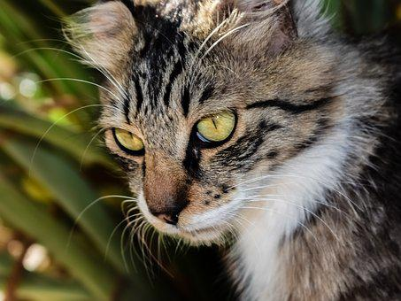 Cat, Stray, Eyes, Animal, Cute, Looking, Young