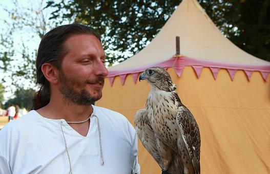 Falco, Raptor, Bird, Animals, Predator, Falconer